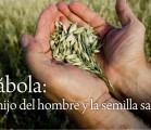 Parábola: El hijo del hombre y la semilla sana